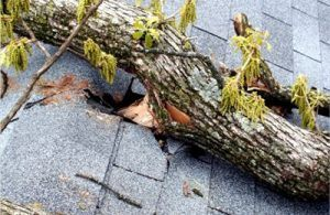 storm_damaged_shingles_from_thrown_tree_branch