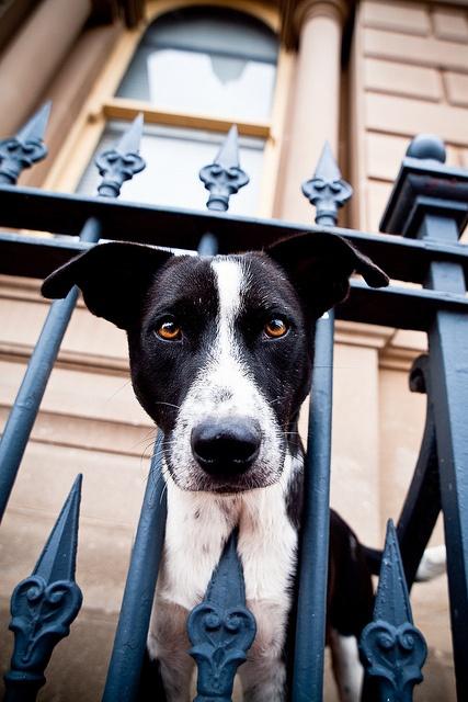 Dog Fencing