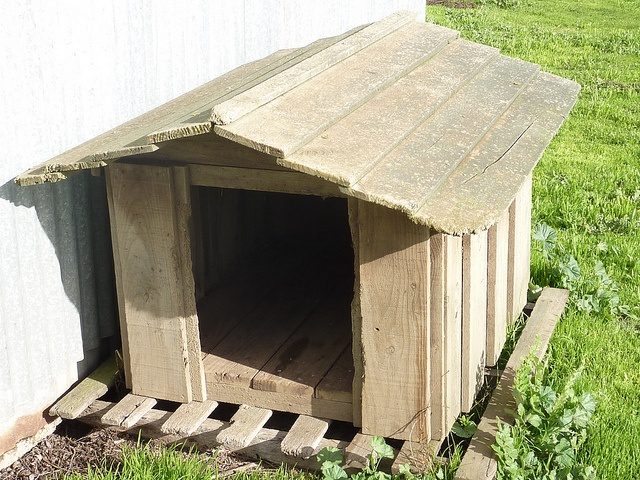 Dog Kennel for shelter