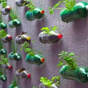 Repurposing Plastic Bottles for a Vertical Garden
