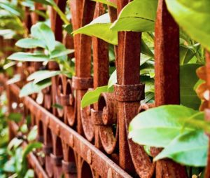 Fence with plants