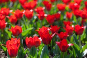 Red Flower in Backyard
